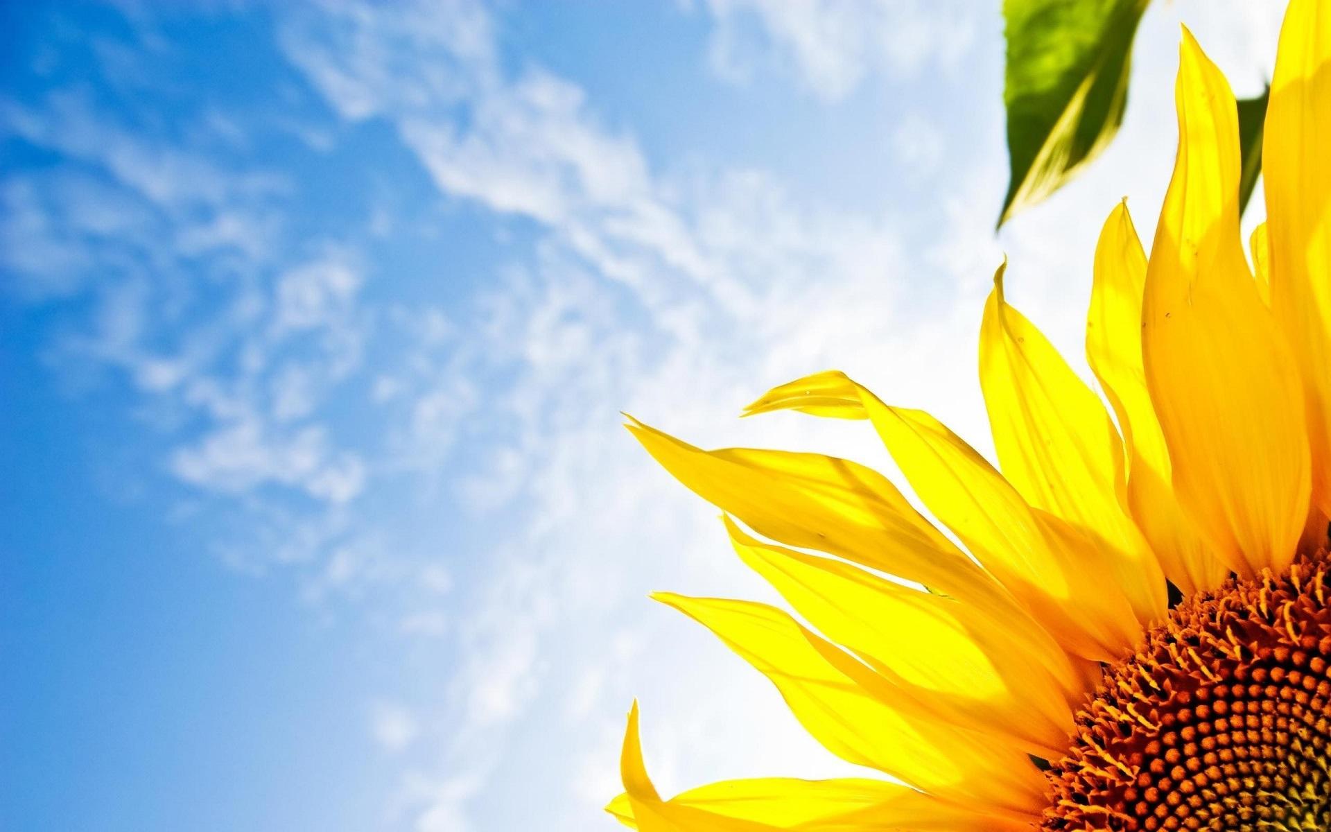 Nuovo sito Società Cooperativa Sole Sereno